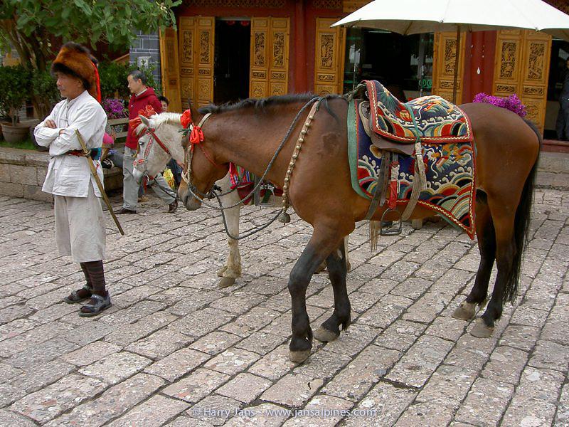 Lijiang, horse man with red panda hat