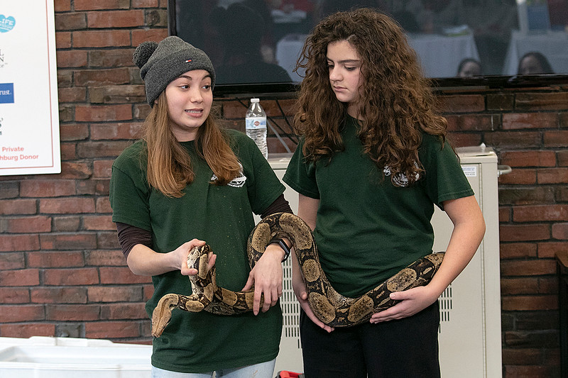 Animal Adventures out of Bolton visited the Fitchburg Public Library on Friday, Dec. 27, 2019 with some of their animals. Angela Baptiste, 19, and Giavanna Laquidara,11, with Animal Adventures hold the red tail boa constrictor that they had brought with them to the library. SENTINEL & ENTERPRISE/JOHN LOVE