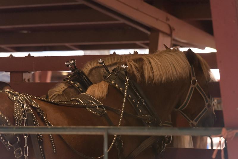 Draft Horse Classic 2016