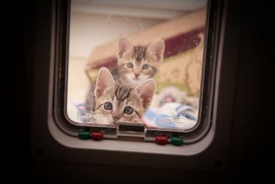 Temp fosters, Momma Cat (Diane)