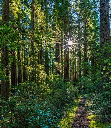 Hope_Ten Taypo Trails