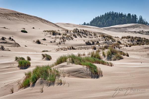 Oregon Dunes NRA Gallery