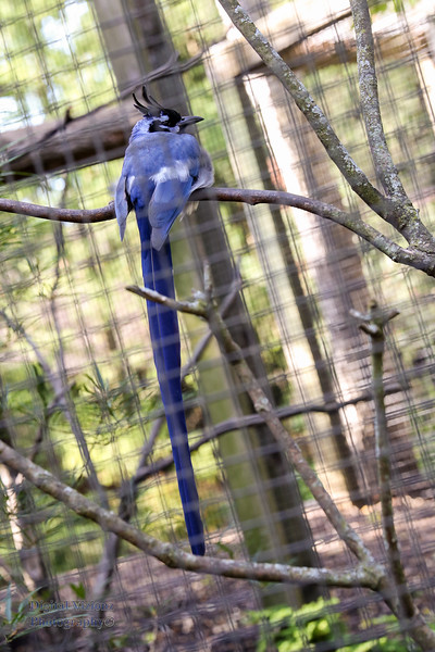 2016-07-17 Fort Wayne Zoo 014LR.jpg