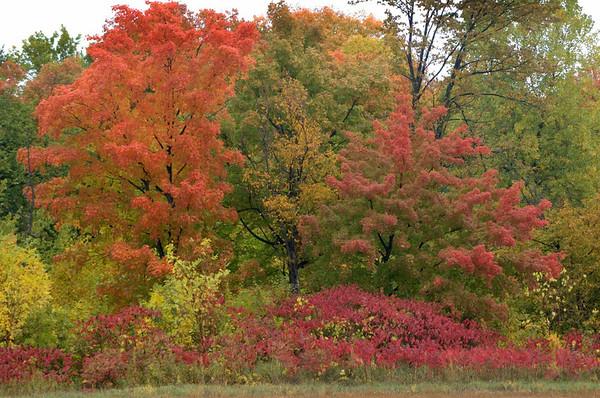 165-254-fall colors.JPG