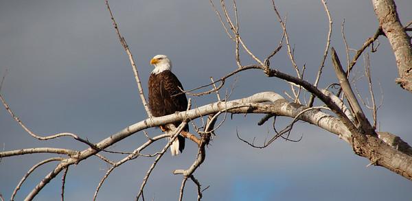 Eagles Owls Birds of Prey
