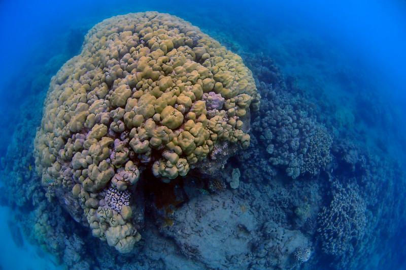 Hawaii - Hanauma Bay-39.JPG