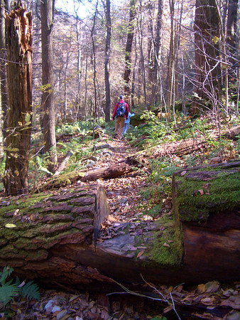 George Washington & Jefferson National Forest