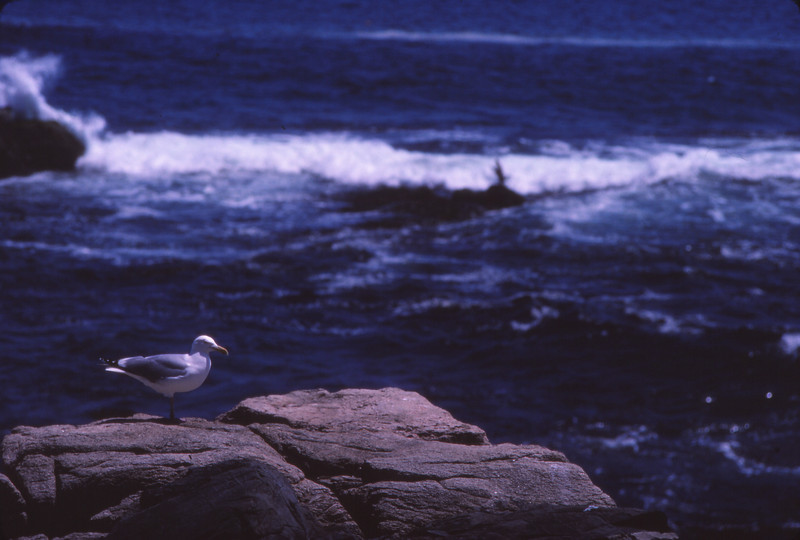 Nova Scotia 1983 - 071.jpg