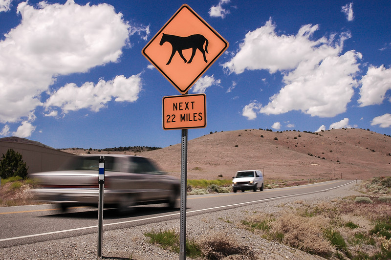 Wild Horse Warning Sign  #1