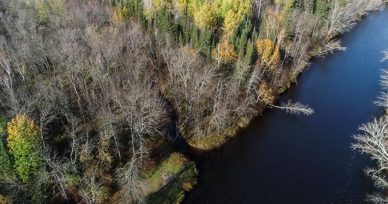 Wood Thrush Woods on the Whiteface River Sax-Zim Bog MN DJI_0003-6.jpg