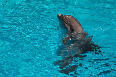 2010-08-19 Marineland