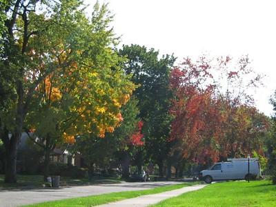 Royal Oak Fall Color