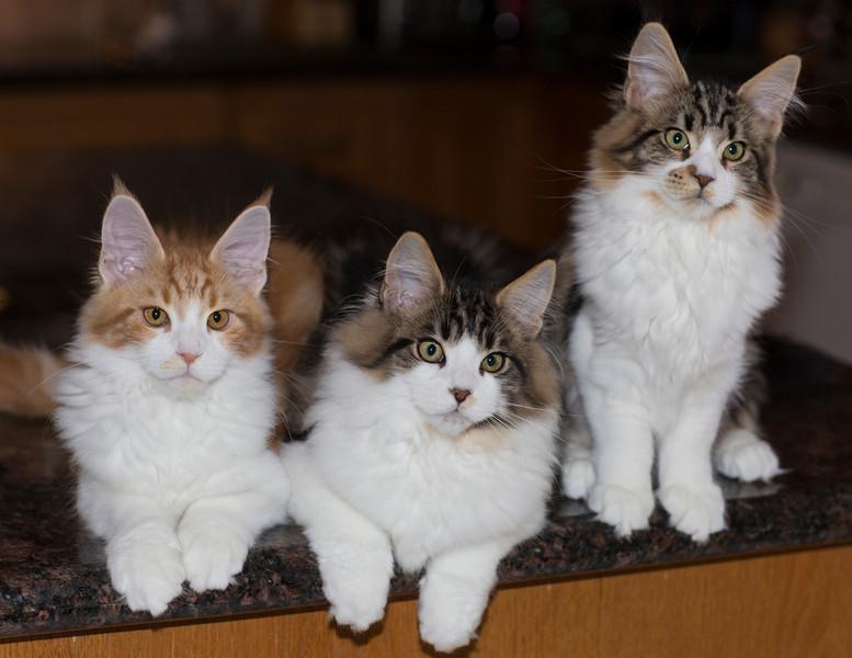Kittens284.jpg
