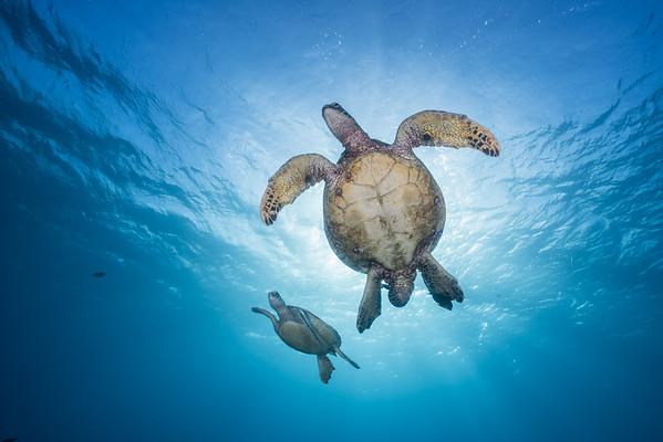 Big Sea Creatures