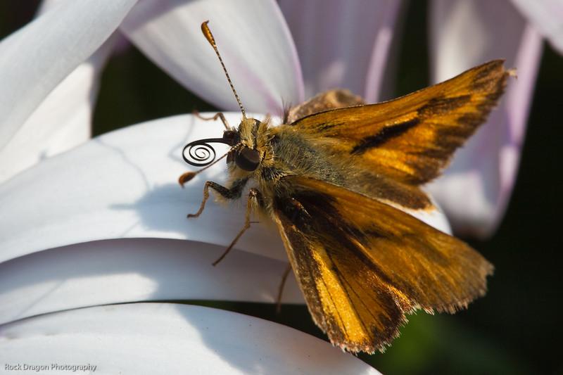 Moth, Calgary Zoo, Sept. 30