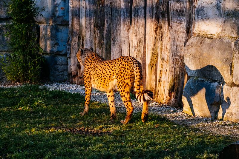 Tonis Zoo-0282.jpg