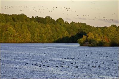 NJAS Plainsboro Preserve