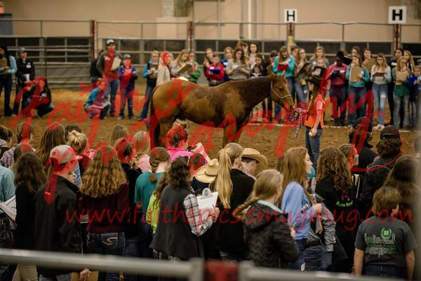 San Antonio, horse judging 021918