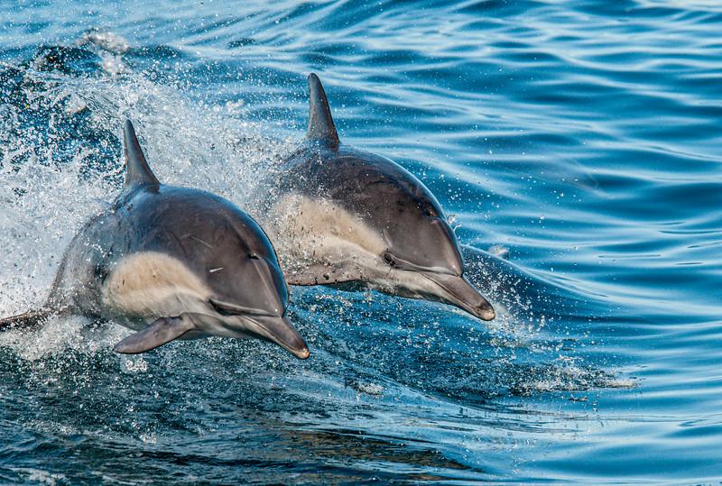 Dolphin-9.jpg