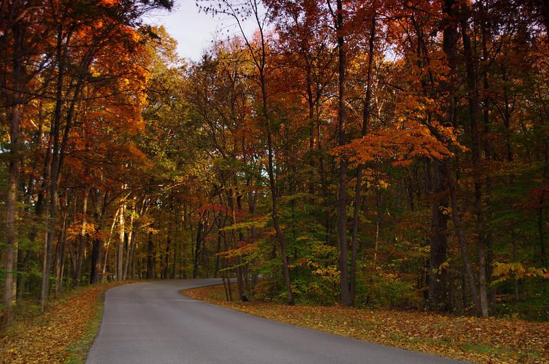 Park road.jpg