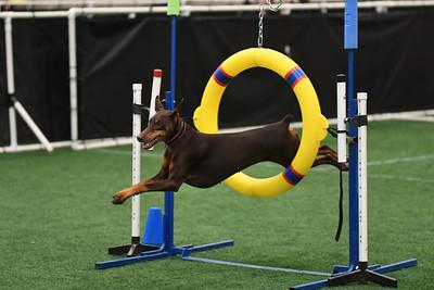 Princeton Dog Training Club AKC Agility Trial May 17-18
