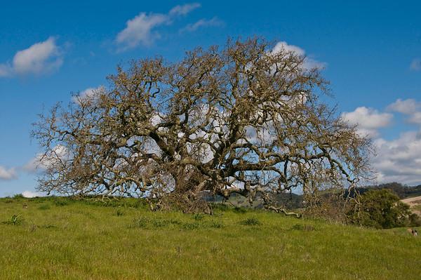 Bodega Bay-Crane Creek-Armstrong Redwoods