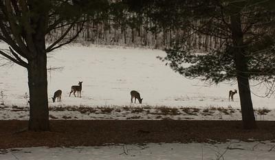 02-03-2020-deer
