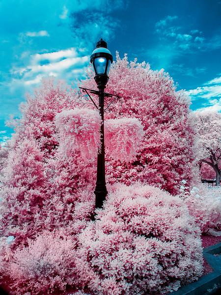 2015-Washington-DC Infrared