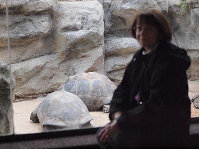St Louis Zoo Dec 2012