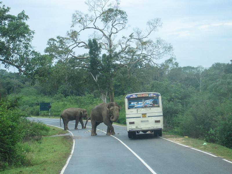 Sri_Lanka17-9600.jpg