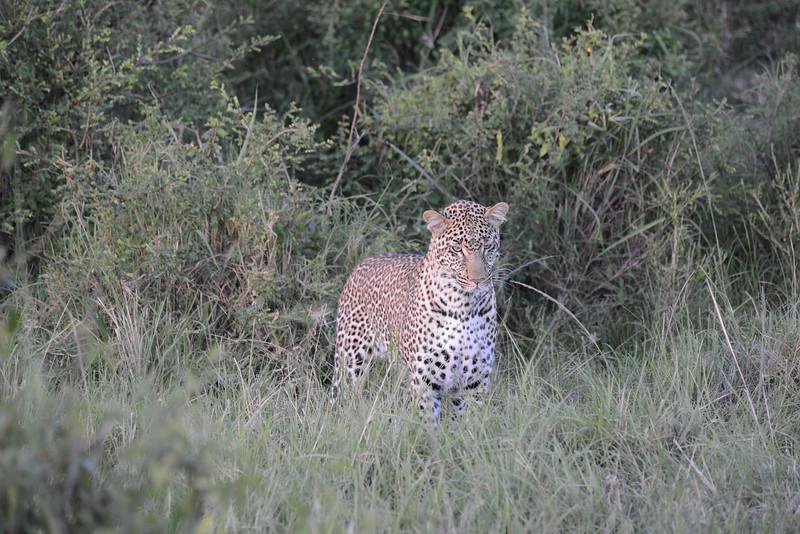 East Africa Safari 174.jpg