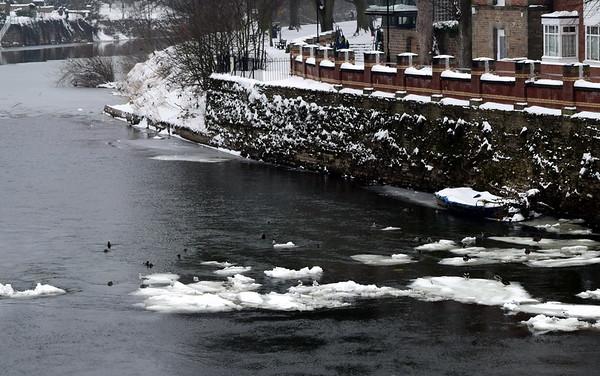 Hereford - Snow
