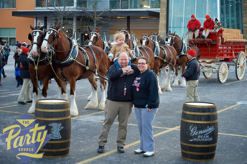 Clydesdale Portraits 207.jpg
