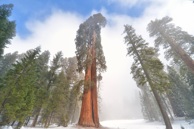 Giant Tree Forest Trail in Sequoia National Park