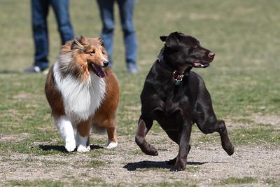 4/22/2018 Spring Finally Comes to the Farmington Hills Dog Park