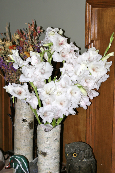 Gladiolas from the Garden