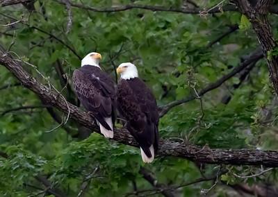 Even More Eagles