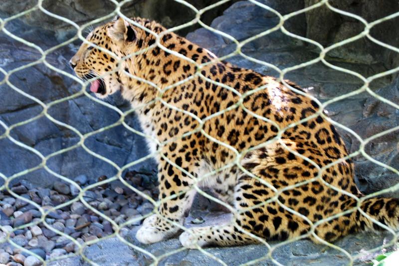 2014 Zoo in Sanford, Florida (15).JPG