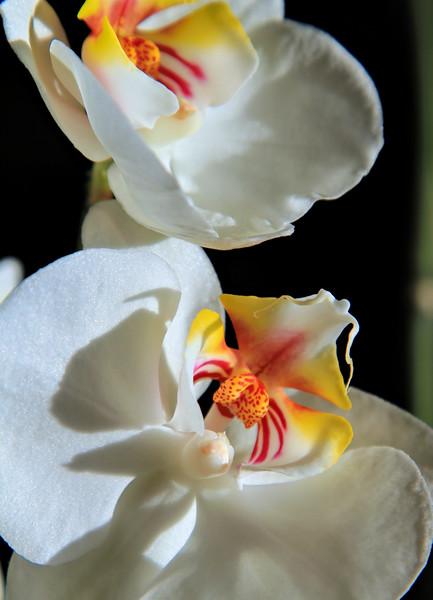 OrchidsHomeErieCO-001