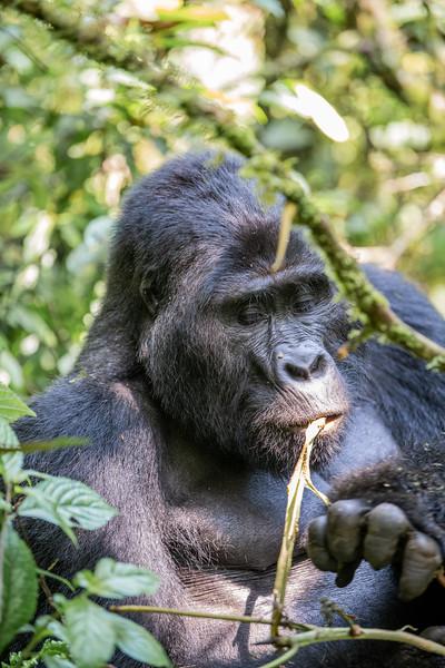 Uganda_T_Gor-304.jpg