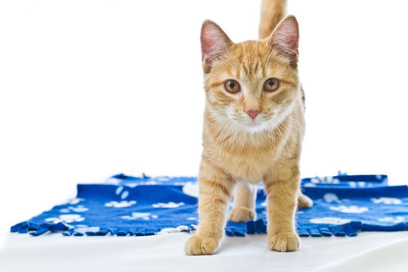 1202_Cats_090.jpg