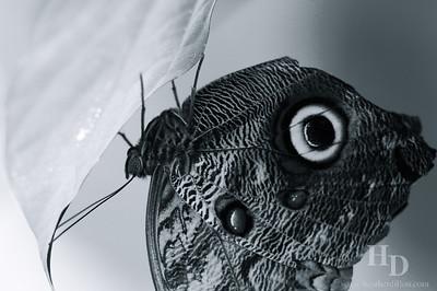 2007-10 Butterflies