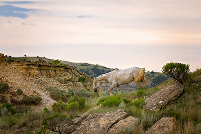 Theodore Roosevelt National Park Wild Horses