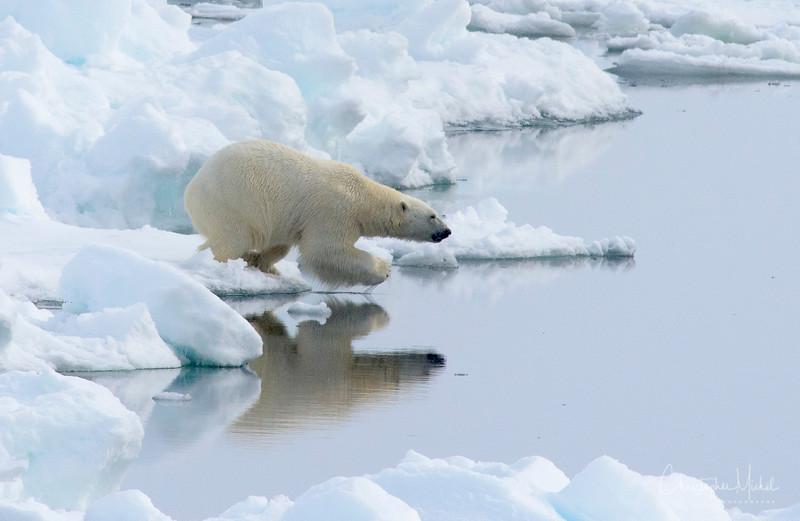 Polar Bear Dip.jpg