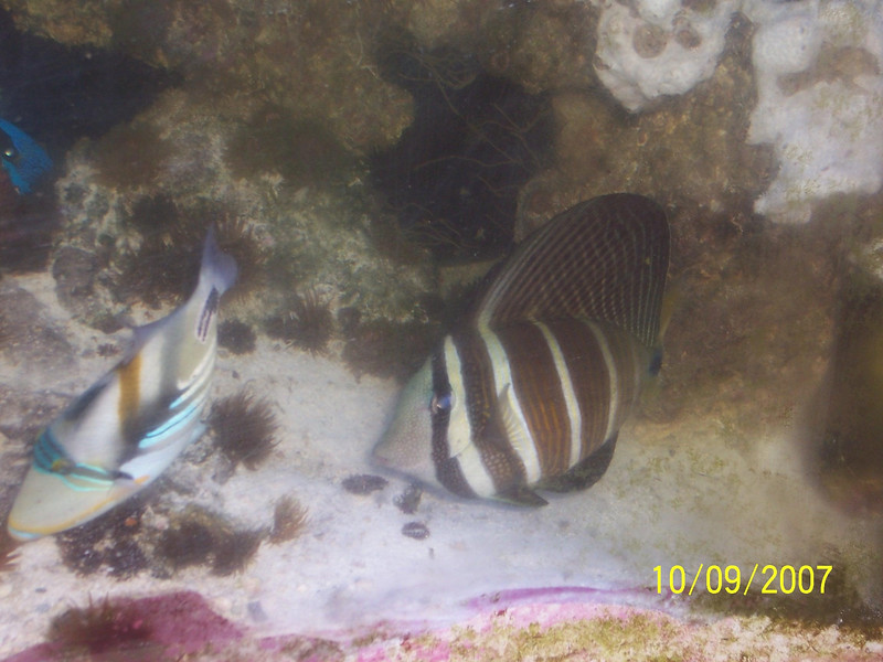 Fishtank 009b.JPG