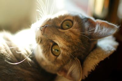 Gemma (cat)