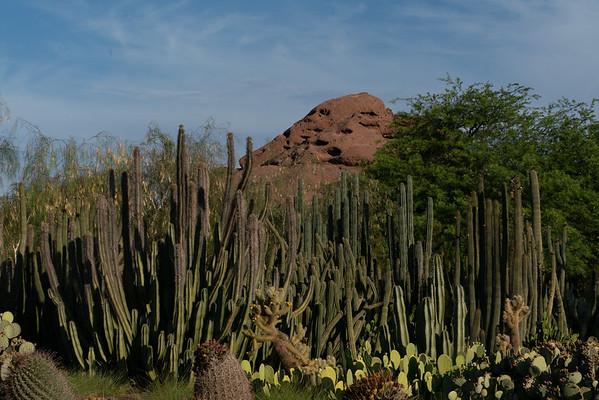 Desert Botanical garden 6 30 19