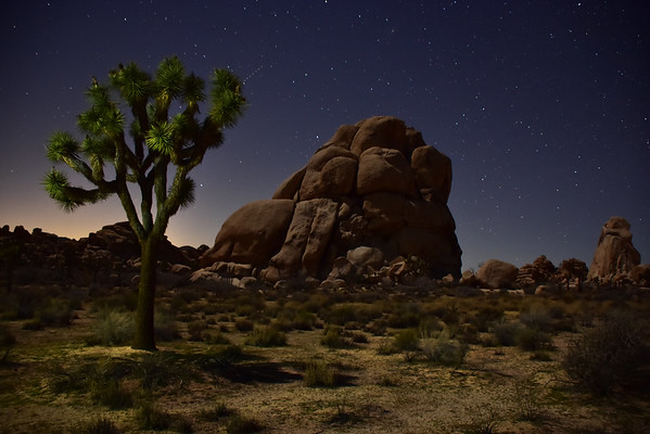 Joshua Tree National Monument