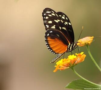 Butterflies & Moths. Set 8