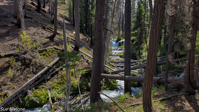 08-18-2020 Boundary Springs Hike-9.jpg